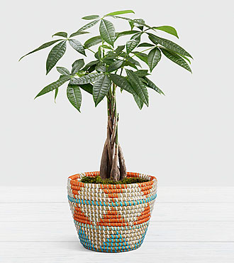 Braided Money Tree in Southwest Print Basket