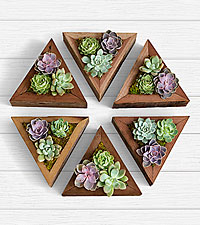 6 Handmade Wooden Succulent Triangles