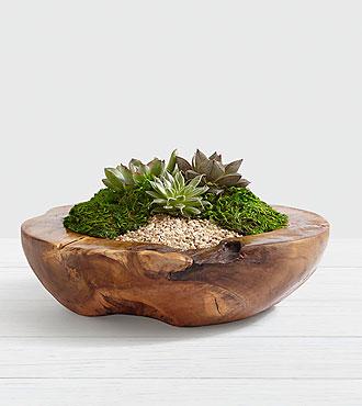 Teak Succulent Desert Garden