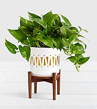 Golden Pothos–Tabletop Plant with Stand