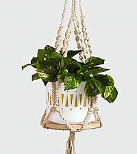 Golden Pothos Macrame Hanging Plant