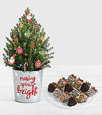 Santa's Workshop Spruce Tree with Full Dozen Gourmet Dipped Fancy Strawberries