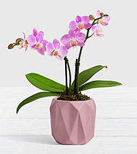 Pink Mini Orchid in Lilac Origami Planter