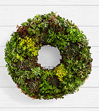 14' Living Succulent Wreath