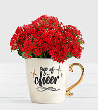 Cup of Cheer Red Kalanchoe Plant