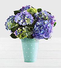 Potted Blue Hydrangea in Mint Polka Dot Bucket