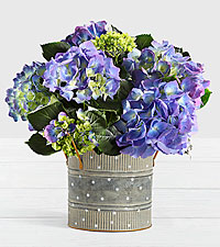 Potted Blue Hydrangea in Farmhouse Tin