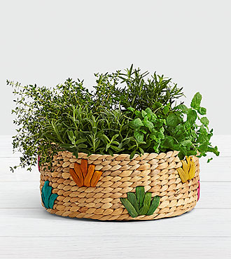 Herb Garden Party in Colorful Basket