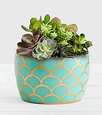 Desert Jewel Succulent Garden