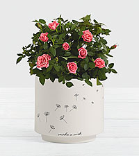 Pink Potted Roses in Make a Wish Planter