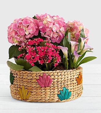 Pink Flowering Market Garden in Colorful Basket