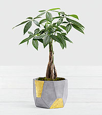 Braided Money Tree in Gold & Grey Geo Clay Pot