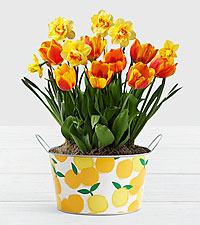 Sweet Citrus Bulb Garden in Citrus Drink Tub