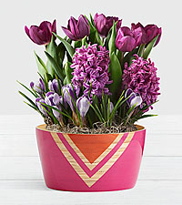 Fragrant Purple Bulb Garden in Pink Bamboo Bowl