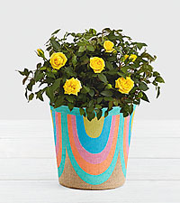Potted Yellow Roses in Rainbow Basket