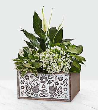 Peaceful White Garden in Dove Crate