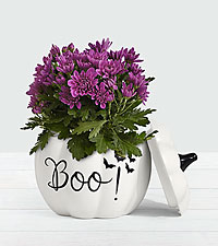 Purple Mum in 'Boo' Pumpkin