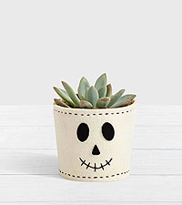 Spooky Skeleton Succulent