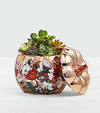 Pumpkin Spiced Succulents in Floral Pumpkin