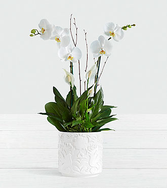 Deluxe White Orchid Garden
