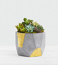 Succulent Garden in Gold & Grey Geo Clay Pot