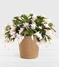 Modern White Cactus