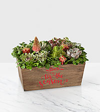 Tis the Season Succulent Garden 11in