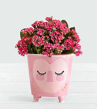 Sweetest Love Pink Calendiva