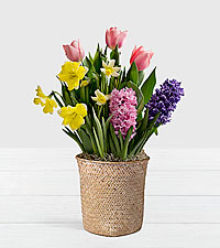 Colorful Bulb Garden in White Woven Basket