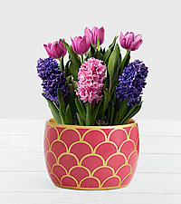 Royal Bulb Garden in Hot Pink Container