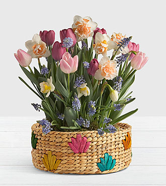New Beginnings Bulb Garden in Colorful Basket