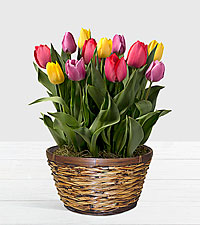 Rainbow Tulips in Dark Brown Container