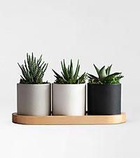Tower Succulents Trio