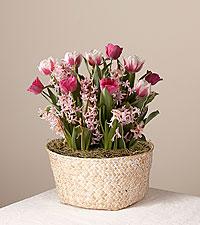 Thinking of You Tulip Garden