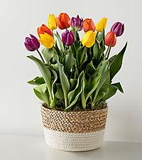 Spring Fling Tulip Garden