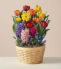Hello Spring Bulb Garden