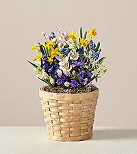 Dear Mom, Bulb Garden