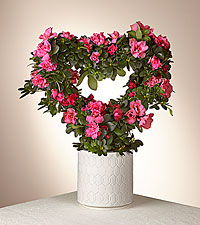 Heart You Azalea Topiary