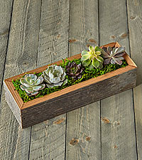Succulent Garden DIY Kit