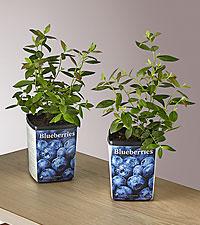 Blueberry Garden Kit