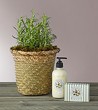 Mother's Day Rosemary Bundle
