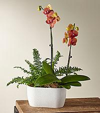 Autumn Glow Orchid & Fern Garden