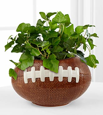 Football Fields Ivy Plant