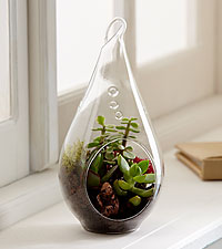 Glass Garden Teardrop Terrarium
