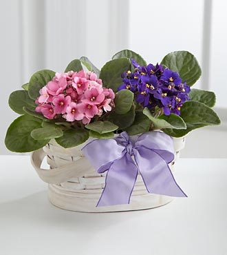 Violet Views Blooming Basket