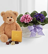 Violet Views Blooming Basket with Bear and Chocolates