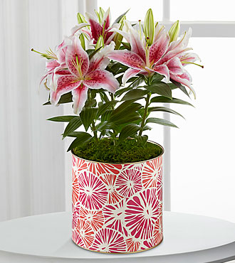 Sweet Pink Lily Plant - Better