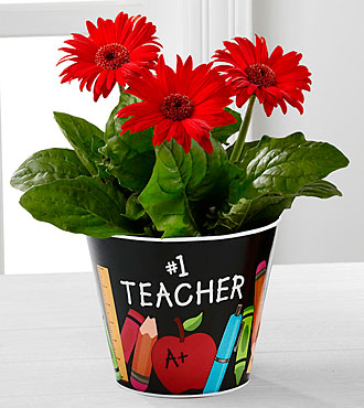World's Best Teacher Gerbera Daisy Plant