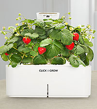 Click & Grow™ Smartpot Strawberry Grow Kit