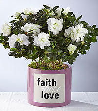 Faith Hope Love Azalea